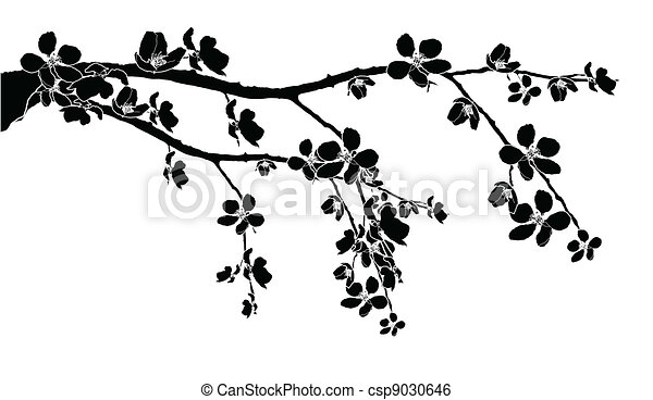 Branch of beautiful cherry blossom  - csp9030646