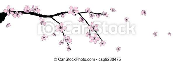 Branch of beautiful cherry blossom  - csp9238475