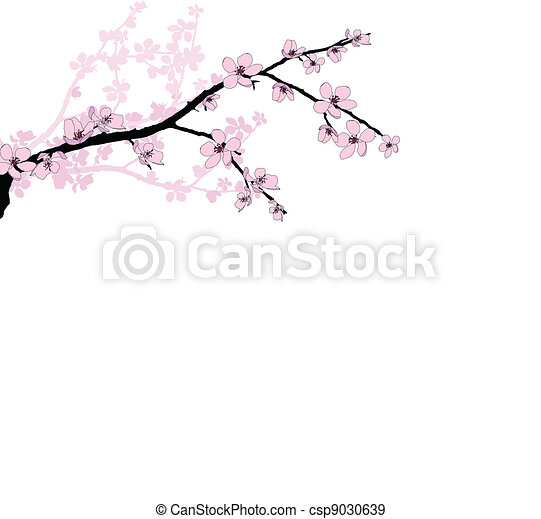 Branch of beautiful cherry blossom  - csp9030639