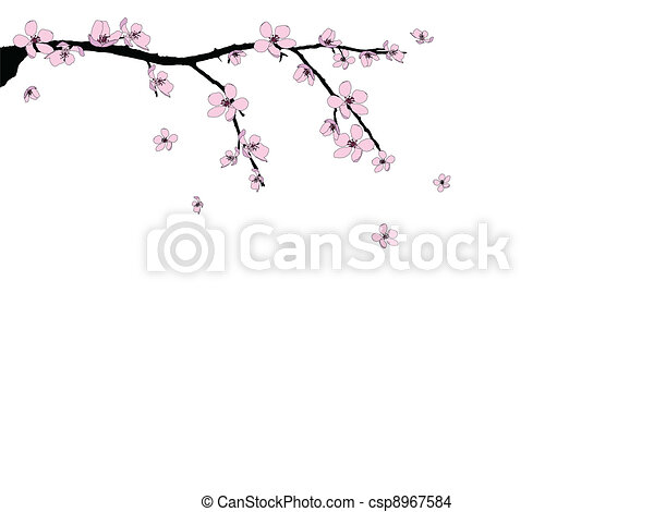 Branch of beautiful cherry blossom  - csp8967584