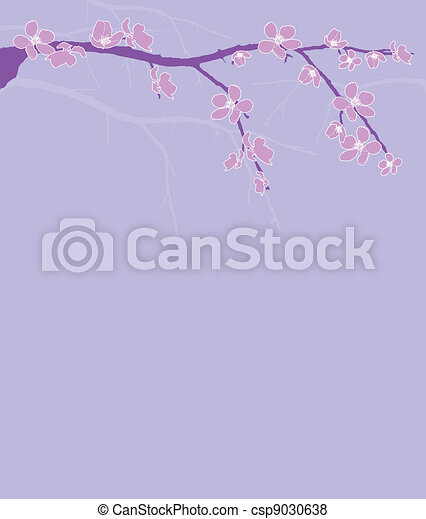 Branch of beautiful cherry blossom  - csp9030638