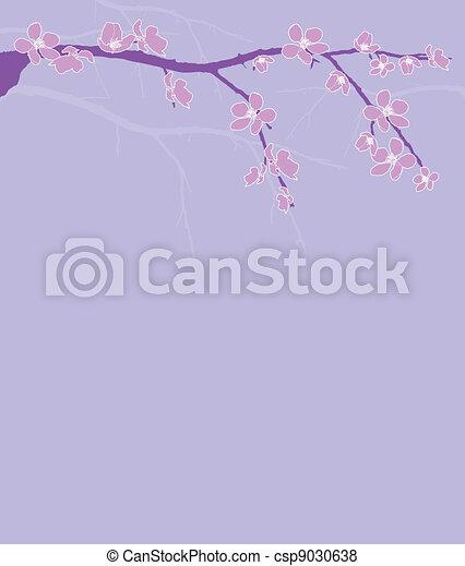Branch of beautiful cherry blossom  - csp9030638