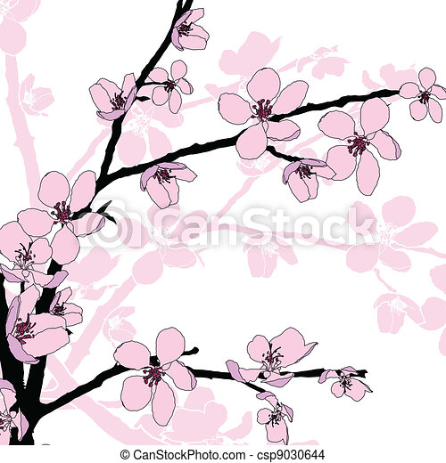 branch of beautiful cherry blossom vector