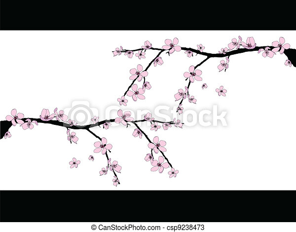Branch of beautiful cherry blossom  - csp9238473