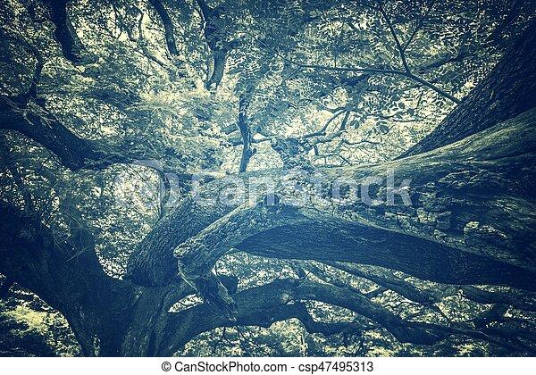 branch of big tree, vintage filter image - csp47495313