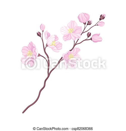 Branch of Cherry Blossom with Tender Pink Flowers Vector Illustration - csp82068366