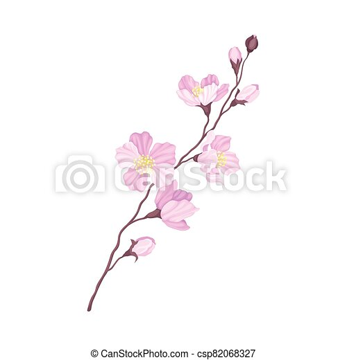 Branch of Cherry Blossom with Tender Pink Flowers Vector Illustration - csp82068327