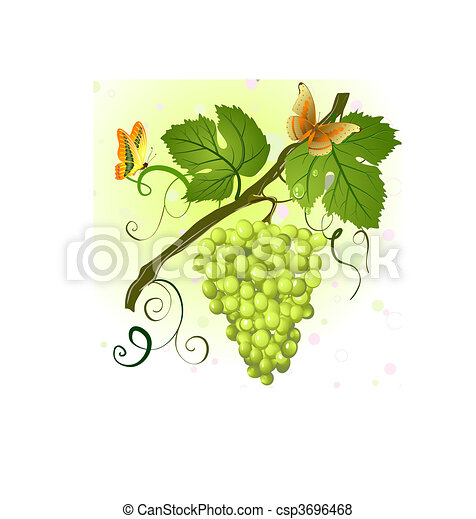 branch of green grapes - csp3696468