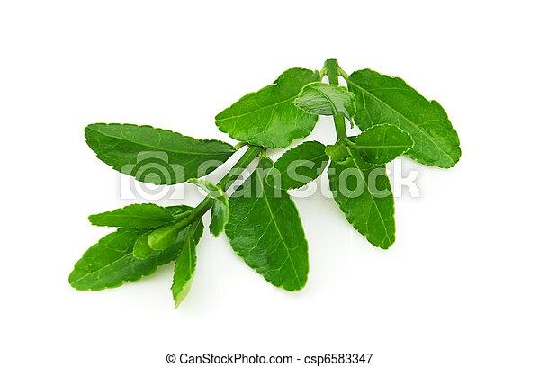 Branch of green tea - csp6583347