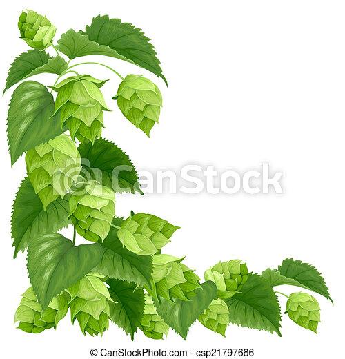 Branch of hops - csp21797686
