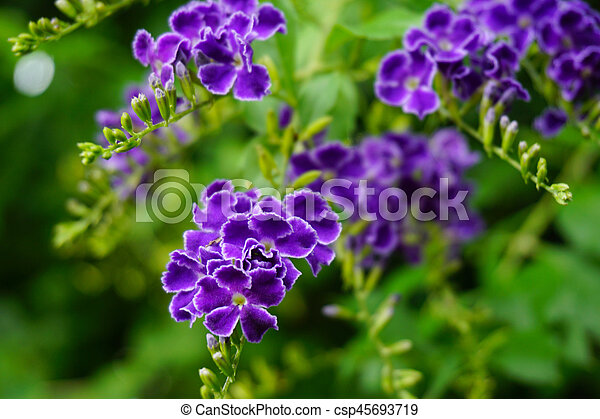 Branch of lilac purple flowers with green leaves, floral natural macro background, soft focus - csp45693719