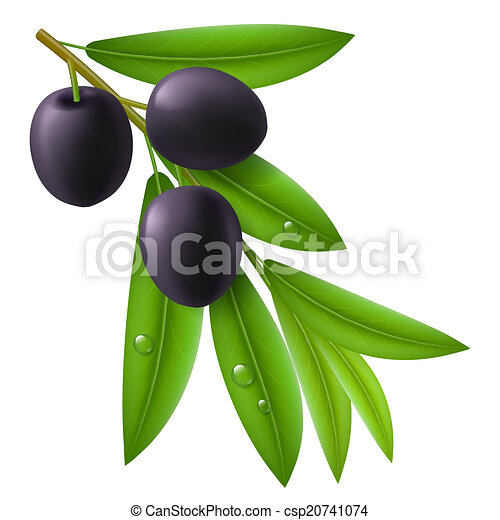 Branch of olive tree with ripe black olives - csp20741074