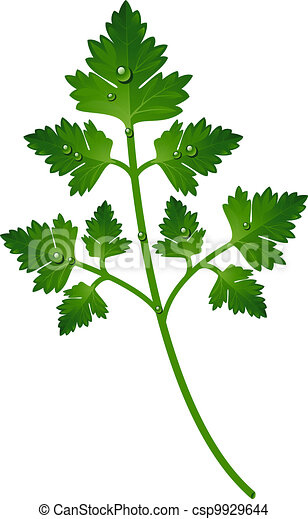 Branch of parsley - csp9929644