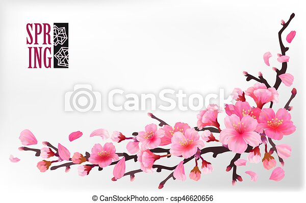 Branch of sakura or cherry blossom - csp46620656