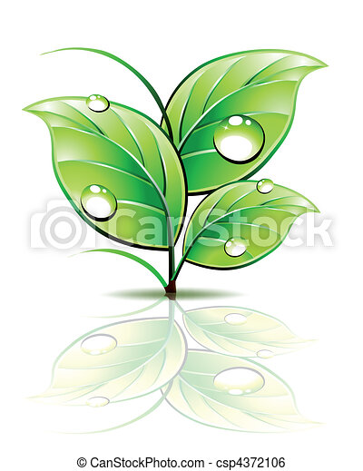 Branch of sprout with dew on green leaves. Vector - csp4372106