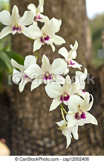 Branch of white orchid - csp12002406