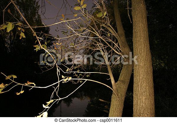 Branch - csp0011611