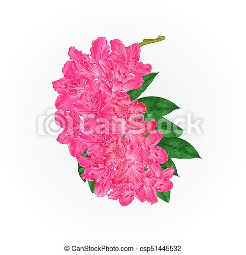 Branch pink flowers rhododendron mountain shrub vintage vectoreps branch pink flowers rhododendron mountain shrub vintage vectoreps mightylinksfo