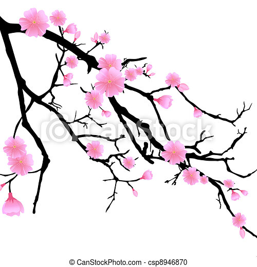 Branch with Cherry Blossoms - csp8946870