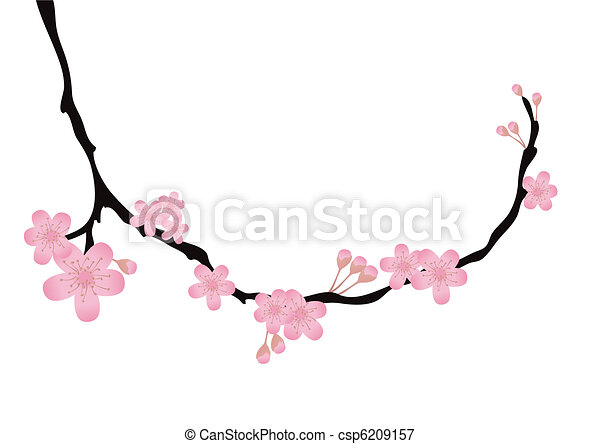 branch with flowers in bloom  - csp6209157
