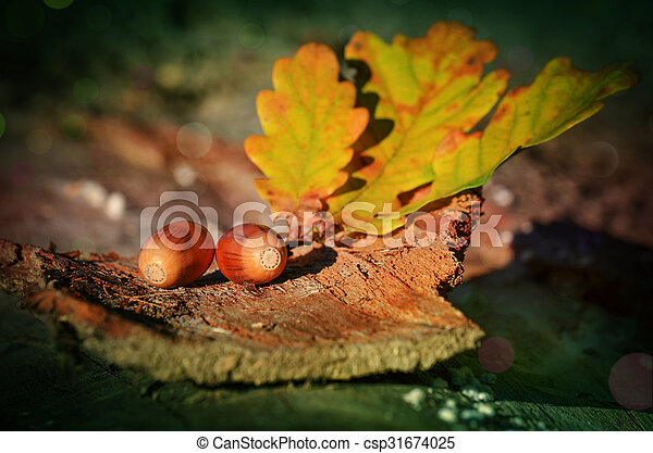 Branch with leaves and acorns - csp31674025