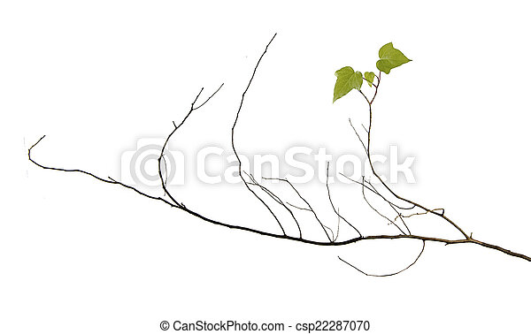 Branch with leaves - csp22287070