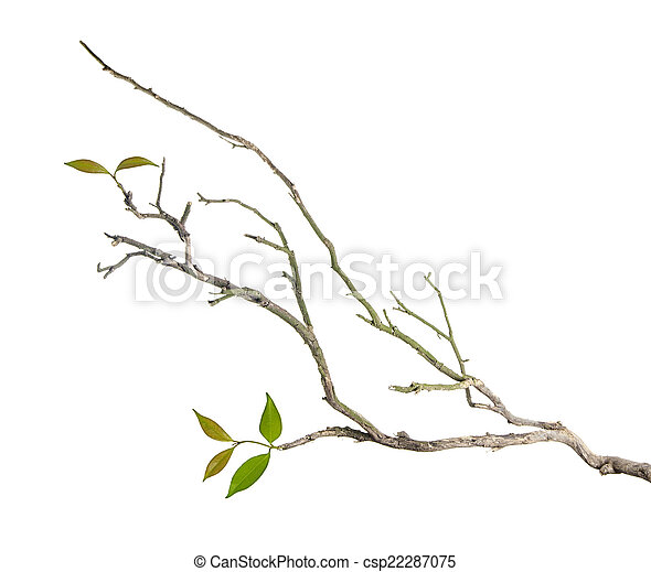 Branch with leaves - csp22287075