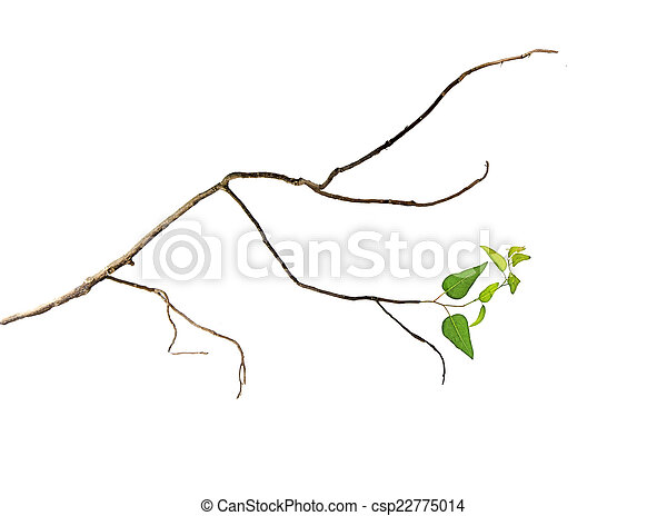 Branch with leaves - csp22775014