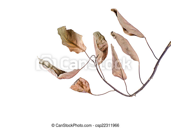 Branch with leaves - csp22311966