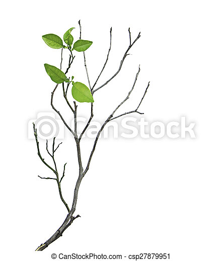 Branch with leaves - csp27879951