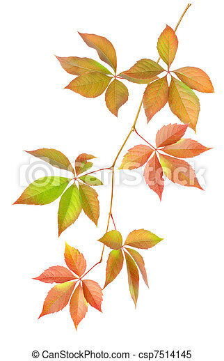 Branch with leaves - csp7514145