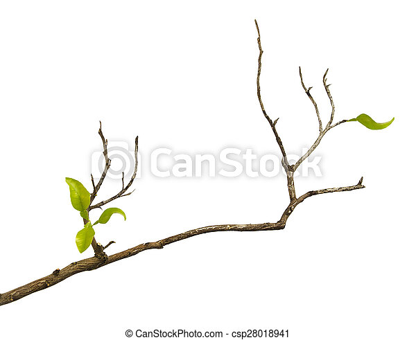 Branch with leaves - csp28018941