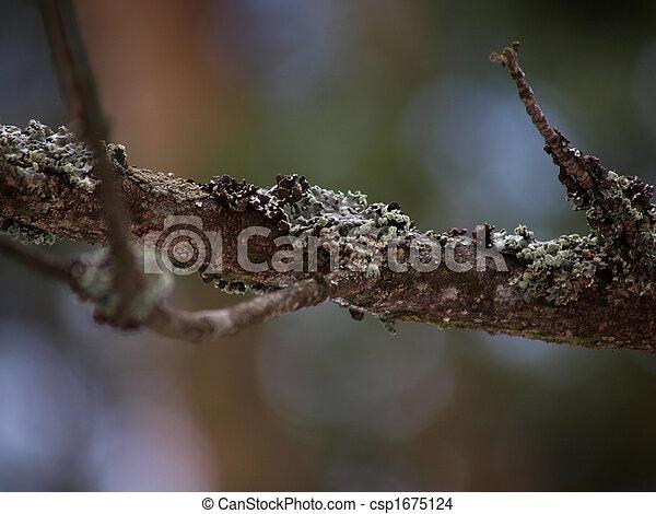 Branch with lichen-moss - csp1675124