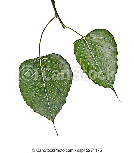 Branch with two leaves - csp15271175