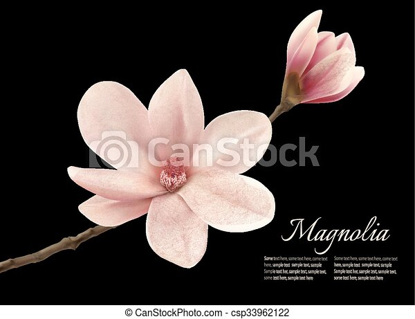 Branch with two pink magnolia flowers vector mightylinksfo