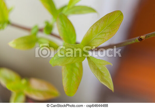 branch with young green sprouts in the spring on blurred background - csp64644488