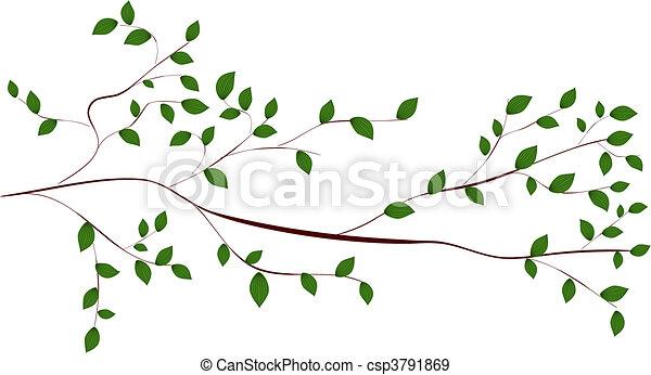 branche arbre - csp3791869