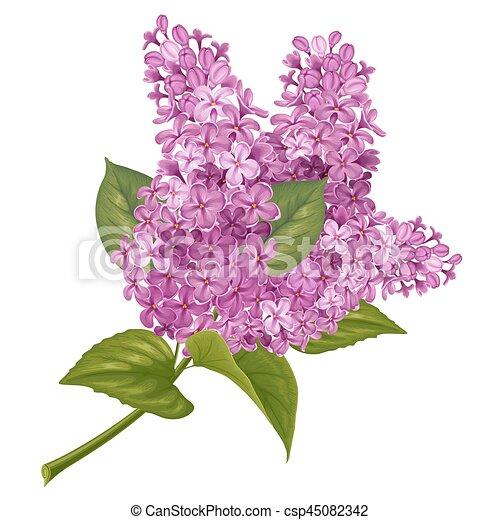 Branche lilas parfum illustration lilac pourpre - Dessin de lilas ...