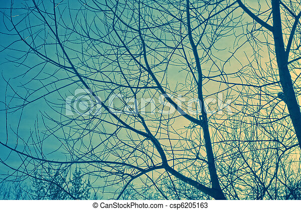 Branches and sky - csp6205163
