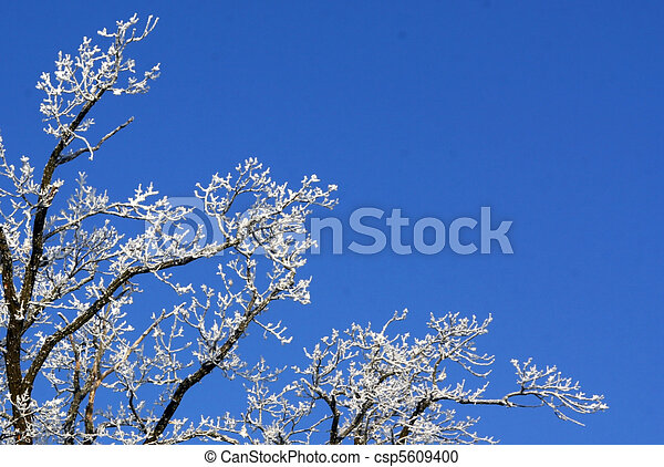 Branches in hoarfrost - csp5609400