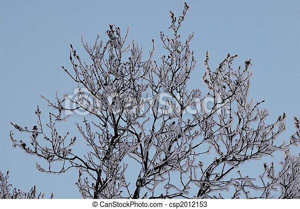 Branches in hoarfrost - csp2012153