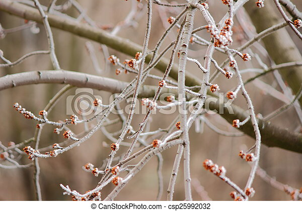 branches in hoarfrost - csp25992032