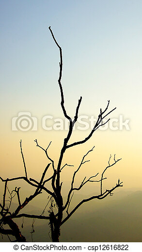 Branches in winter. - csp12616822