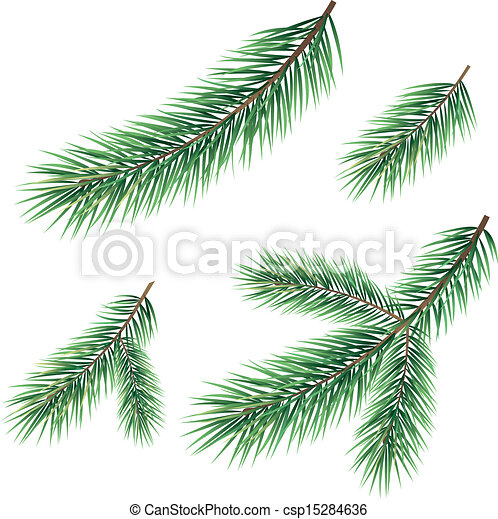 branches of a christmas tree csp15284636 - Christmas Tree Branches