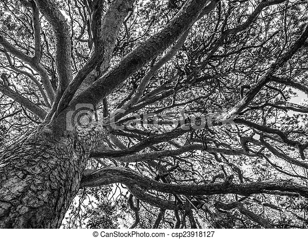 branches of a tree against sky - csp23918127