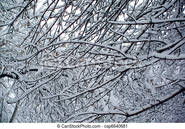 branches of a tree in the snow - csp6640681