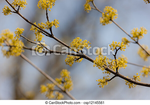 Flowering Branches Of A Tree With Yellow Flowers In Spring