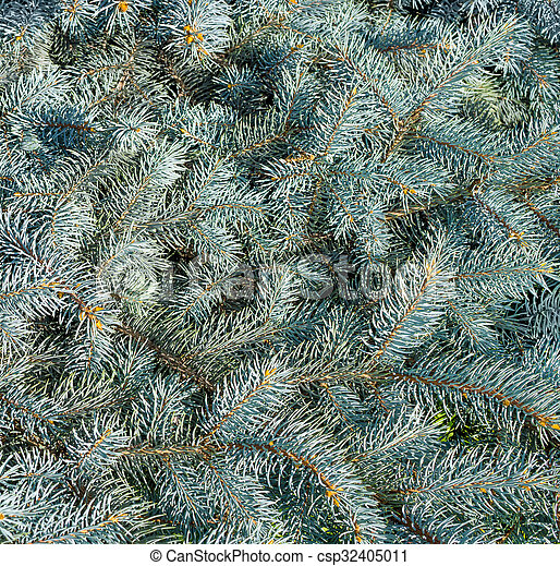 Branches of blue spruce - csp32405011