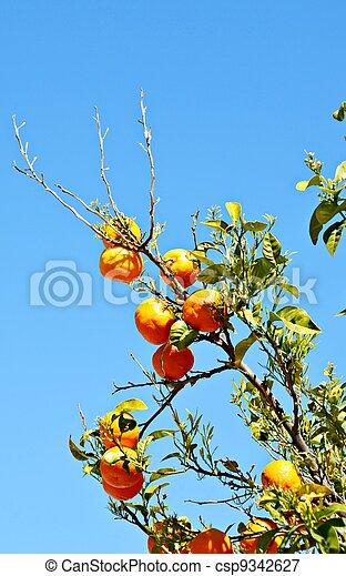 Branches of orange - csp9342627