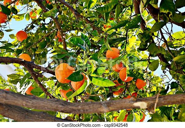 Branches of orange - csp9342548
